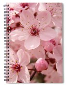 Blossoms Art Prints 63 Pink Blossoms Spring Tree Blossoms Spiral Notebook