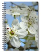 Blossoms Art Prints Whtie Spring Tree Blossoms Blue Sky Baslee Spiral Notebook