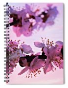 Blossoms At Sunset Spiral Notebook