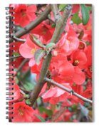 Blossoms Branches And Thorns Spiral Notebook