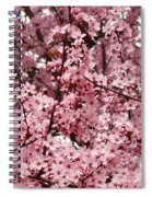 Blossoms Pink Tree Blossoms Giclee Prints Baslee Troutman Spiral Notebook