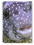 Blow Fish Close-up Spiral Notebook