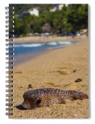Blowfish Offshore  Spiral Notebook