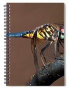 Blue And Gold Dragonfly Spiral Notebook