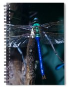 Blue And Green Dragonfly Spiral Notebook