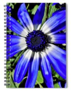 Blue And White African Daisy Spiral Notebook