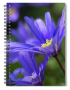 Blue Anemone  Spiral Notebook