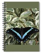 Blue-banded Swallowtail Butterfly Spiral Notebook