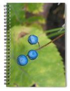 Blue Berries Spiral Notebook