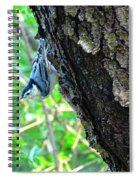 Blue Bird 2 Spiral Notebook