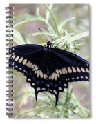 Blue Black Swallowtail Spiral Notebook