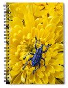 Blue Bug On Yellow Mum Spiral Notebook
