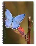 Blue Butterfly On Leaf Spiral Notebook