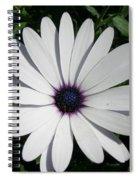 Blue Center Daisy Spiral Notebook