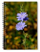 Blue Chicory 2 Spiral Notebook