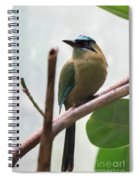 Blue-crowned Motmot Spiral Notebook