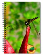 Blue Dasher Damselfly Spiral Notebook