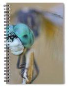 Blue Dasher Dragonfly #1 Spiral Notebook