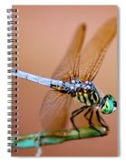 Blue Dasher Dragonfly Spiral Notebook