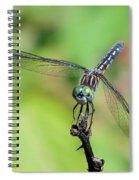 Blue Dasher Dragonfly On A Branch Spiral Notebook