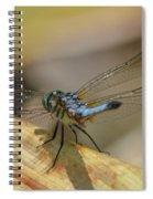 Blue Dasher On Old Leaf Spiral Notebook