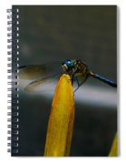 Blue Dhasher Dragonfly Spiral Notebook