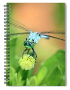 Blue Dragonfly And Bud Spiral Notebook