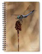Blue Dragonfly On Brown Reed Spiral Notebook