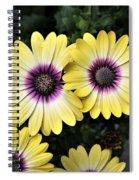 Blue Eyed Beauty African Daisy Spiral Notebook