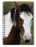 Blue Eyed Beauty Spiral Notebook