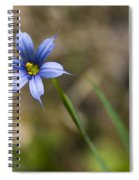 Blue-eyed Grass II Spiral Notebook
