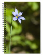 Blue-eyed Grass IIi Spiral Notebook