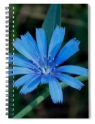 Blue Chicory Flower Spiral Notebook