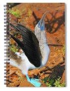 Blue-footed Boobie Display Spiral Notebook