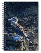 Blue-footed Booby Prize Spiral Notebook