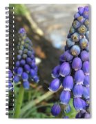 Blue Grape Hyacinths Spiral Notebook