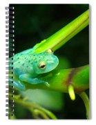 Blue-green Tropical Frog Spiral Notebook