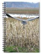 Blue Heron Flight Spiral Notebook