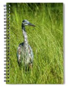 Blue Heron In A Marsh Spiral Notebook