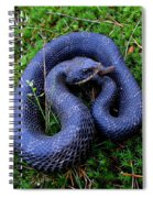 Blue Hognose Spiral Notebook