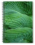 Blue Hosta - Hosta Sieboldiana Spiral Notebook