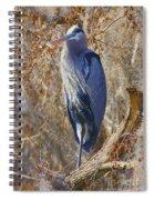 Blue In The Moss Spiral Notebook