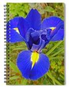 Blue Iris Beauty Spiral Notebook