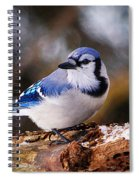Blue Jay Day Spiral Notebook