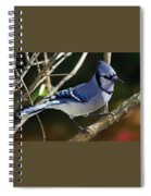 Blue Jay Spiral Notebook