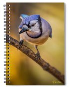 Blue Jay In Golden Light Spiral Notebook