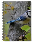 Blue Jay In Red Bud Spiral Notebook