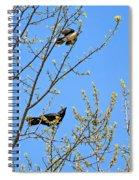 Blue Jay Mobbing A Crow Spiral Notebook