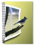 Blue Jay Perched Spiral Notebook