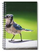 Blue Jay Walk Spiral Notebook